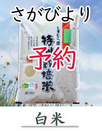 yoyaku-S10-H