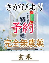 yoyaku-S2orgG