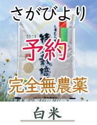 yoyaku-S5orgH